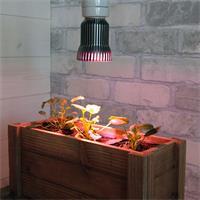 energiesparende LED Wachstumslampe Lichtfarbe rot blau