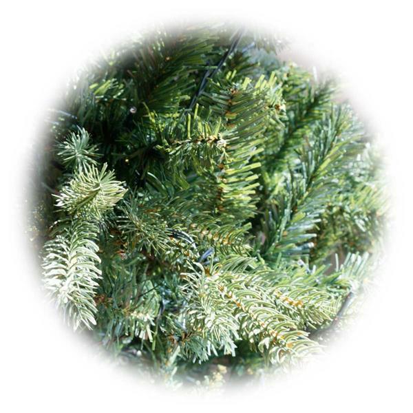 Naturgetreuer Weihnachtsbaum mti 270 warmweißen LEDs